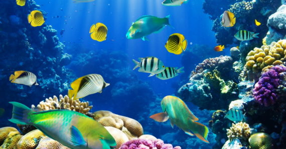 Επτά (7) συμβουλές για να διατηρήσετε τα ψαράκια του ενυδρείου σας υγιή