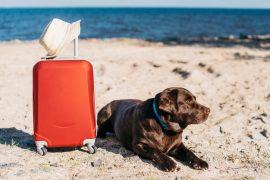 Για τη Βόλτα και το Ταξίδι (Σκύλος)