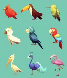 Οδηγός αγοράς Άλλα Είδη (Πουλιά)