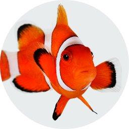 Οδηγός αγοράς Τροπικά Ψάρια (Ψάρια)
