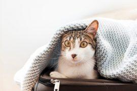 Για το Σπίτι (Γάτα)