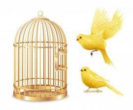 Κλουβιά - Αξεσουάρ (Πουλιά)