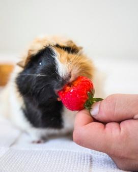 Συμπληρώματα Διατροφής (Μικρά Ζώα)