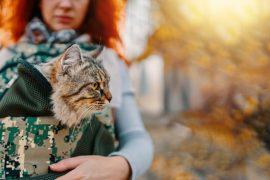Για τη Βόλτα και το Ταξίδι (Γάτα)