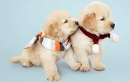 Οδηγός αγοράς Puppy-Μωρό (Σκύλος)